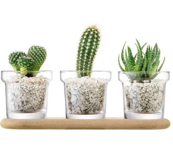 LSA International Plant Trio Set, H11.5cm